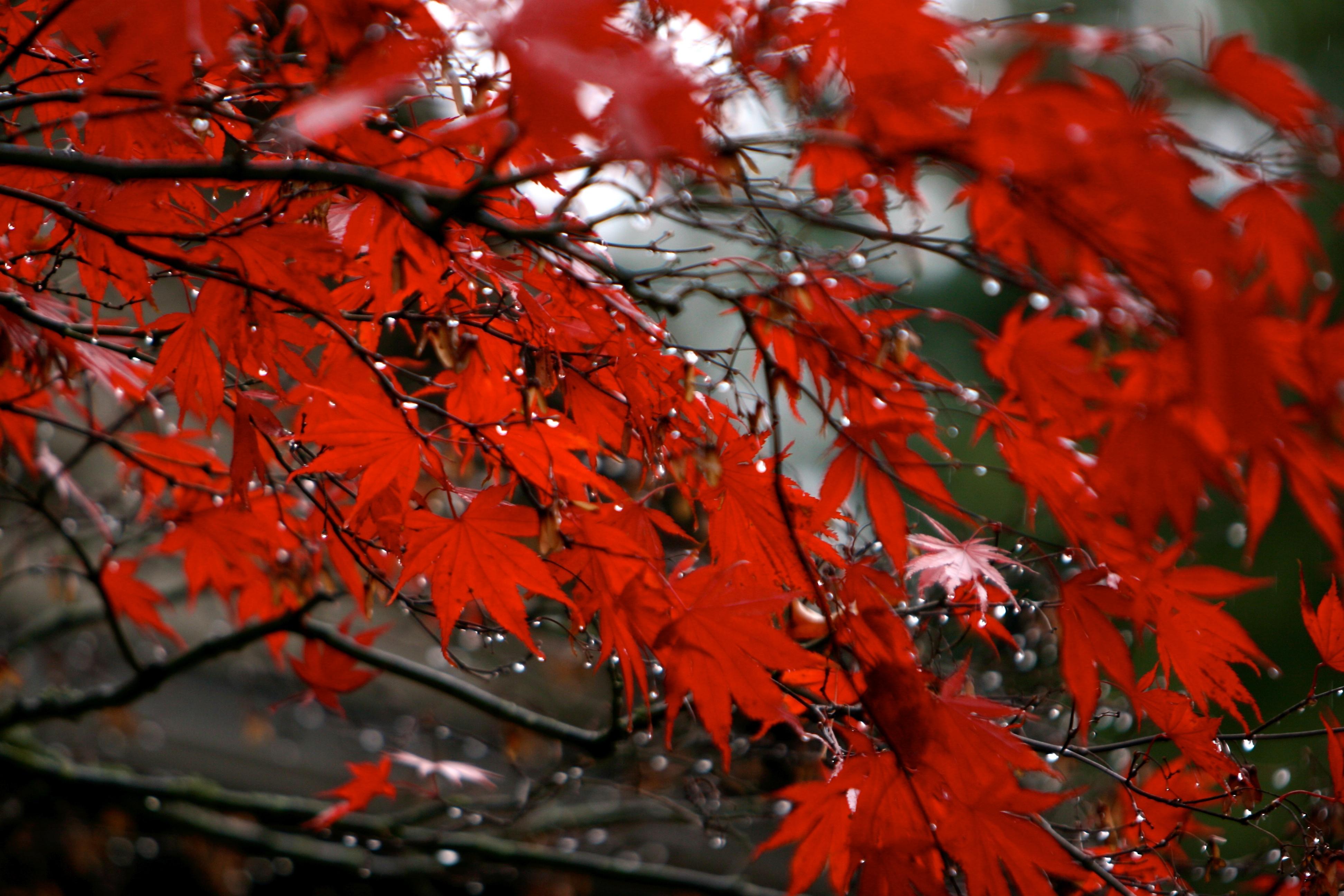Rainy Morning In Portland Oregon