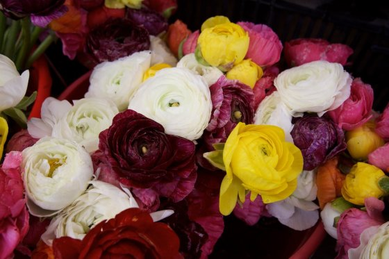 Beautiful Ranunculus , Christina's favorite flowers