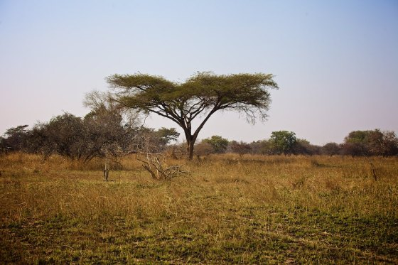 Zambia 11