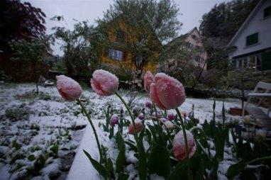 Lucerne airbnb 13