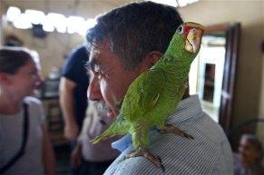 Ponchita on Pastor Aguilar's shoulder