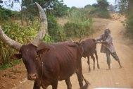 The Uganda countryside 11