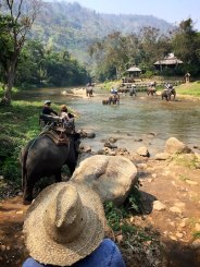 Such a memorable day riding elephants in Thailand with friends new and old